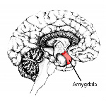 Avoiding amygdala hijack